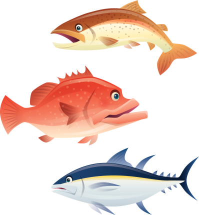 salmon grouper tuna