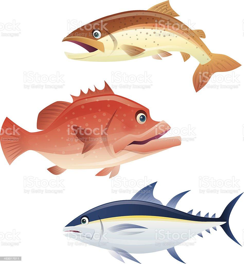 salmon grouper tuna vector art illustration