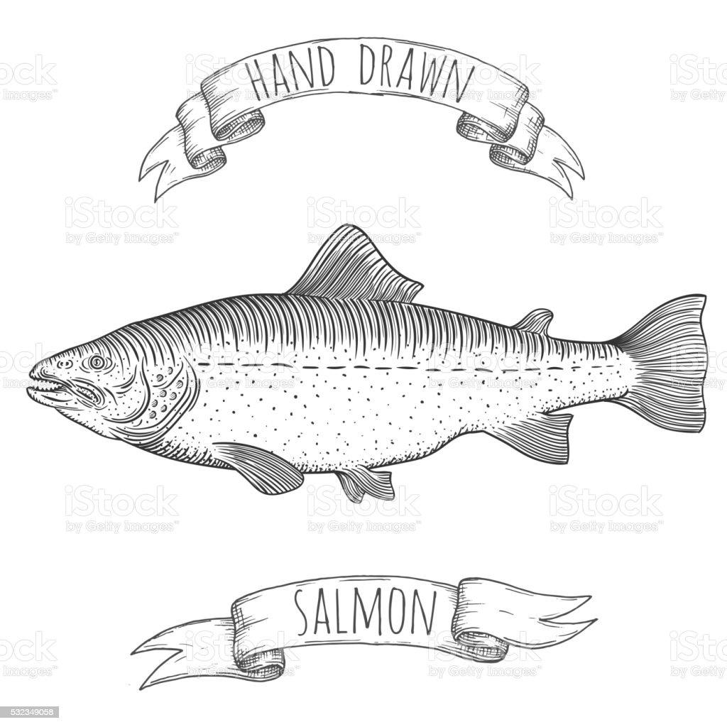 Ilustración de Salmón Ilustración Dibujado A Mano y más banco de ...