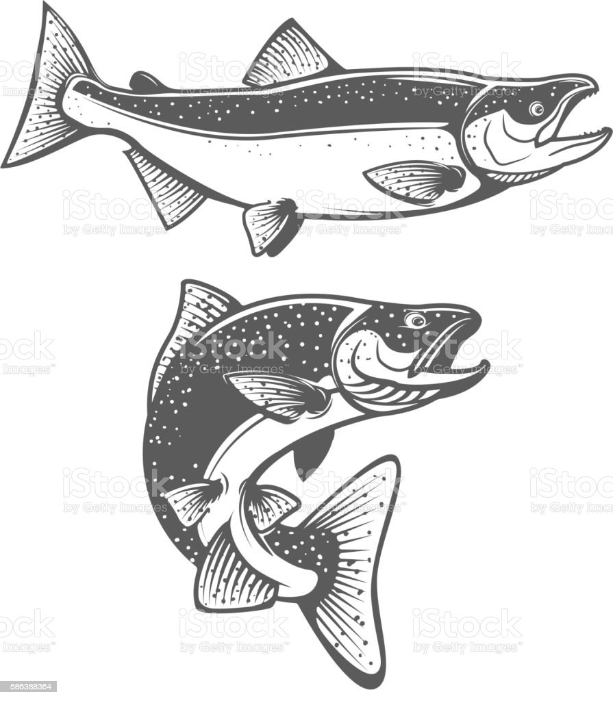Salmon silhouettes. Fresh seafood. Salmon fishing. vector art illustration