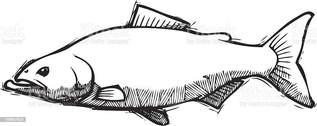 Salmon Sketch vector art illustration
