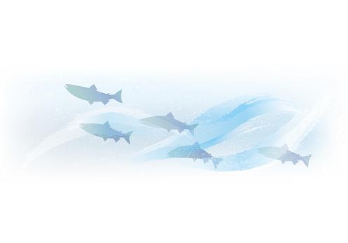 Salmon swimming in torrent