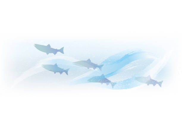 Salmon swimming in torrent vector art illustration