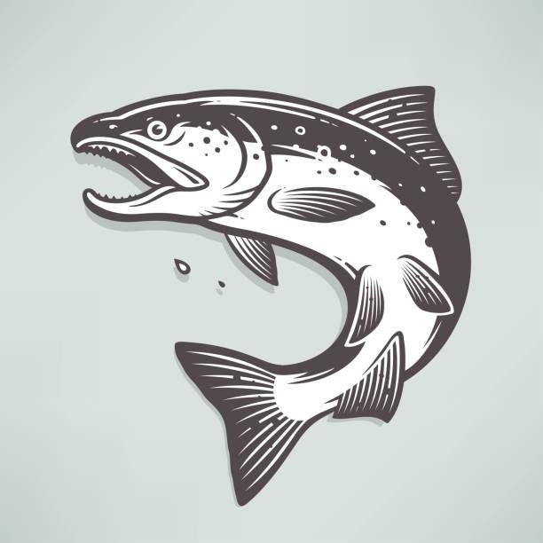 illustrazioni stock, clip art, cartoni animati e icone di tendenza di salmon - trout