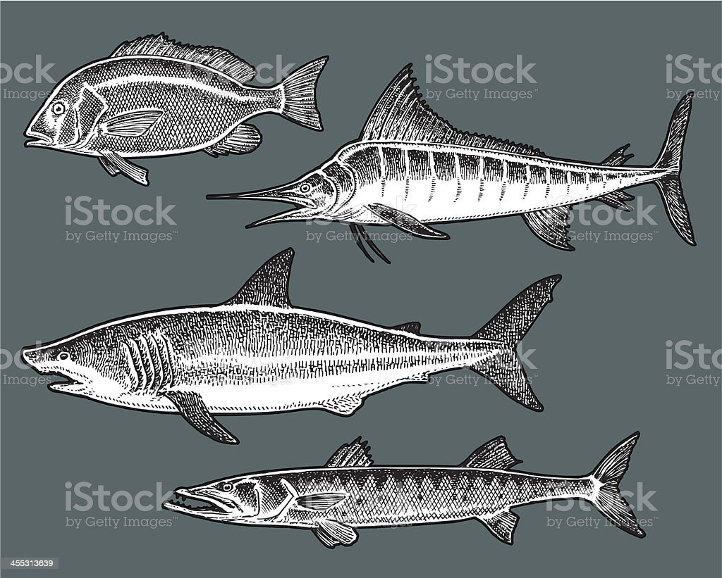 Saltwater Fish - Shark, Marlin, Barracuda, Snapper vector art illustration