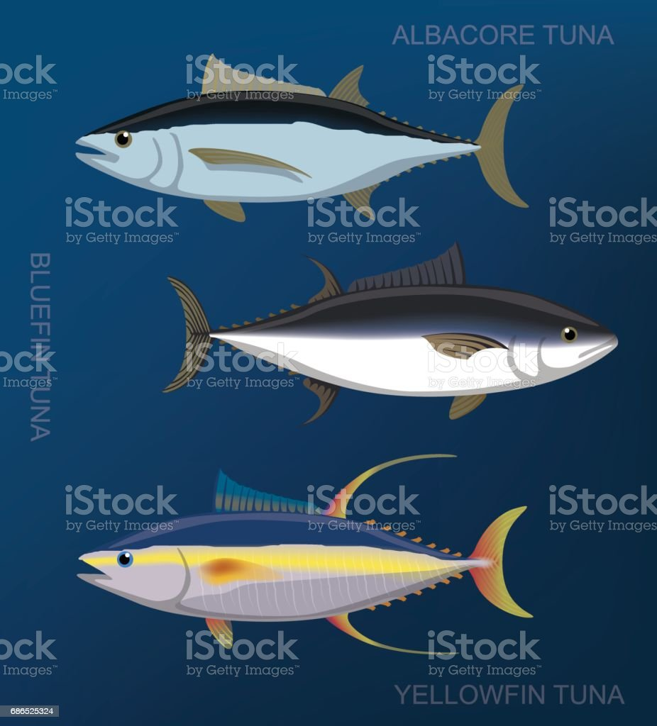 Saltwater Fish Tuna Set Cartoon Vector Illustration vector art illustration