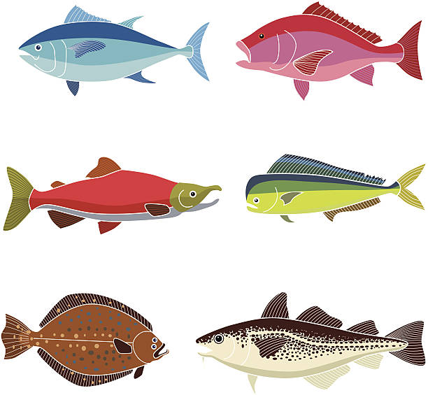 saltwater fish vector art illustration