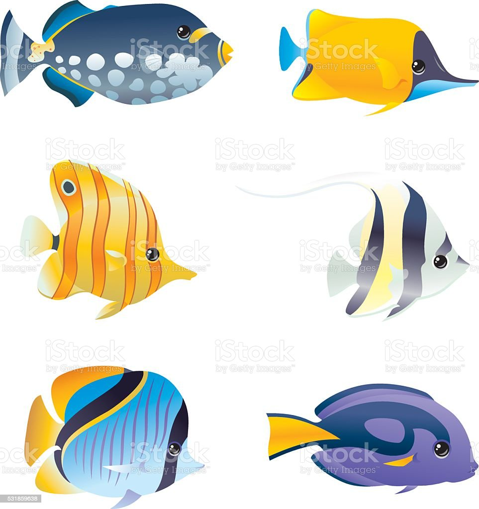 Saltwater Fishes vector art illustration