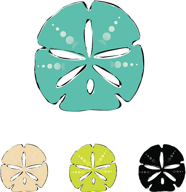 Best Sand Dollar Illustrations, Royalty-Free Vector ...