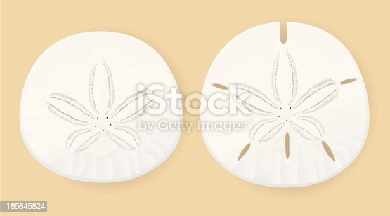 Vector illustration of two sand dollars, one with holes and one without, against a sandy-colored background.  Illustration uses linear gradients on the sand dollars themselves and radial gradients for the shadows underneath.  Sand dollars are each on their own layer and are easily separated from each other and from the background/shadow layer.  Both CS .ai and AI8-compatible .eps formats are included, along with a high-res .jpg.