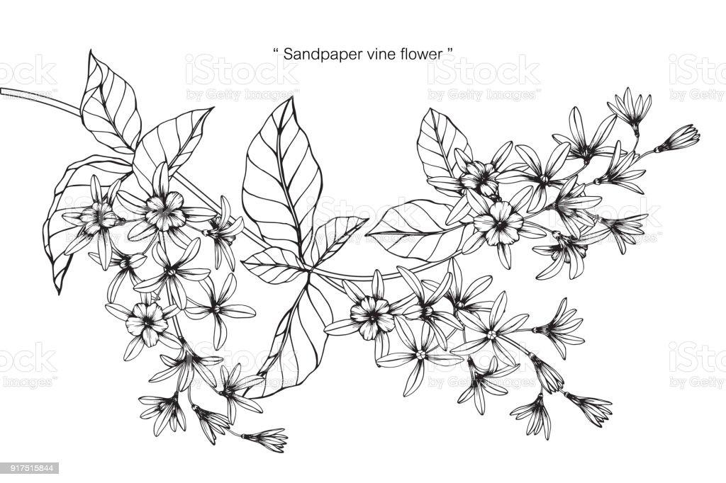 Fleur De Vigne De Papier Dessin Cliparts Vectoriels Et Plus D