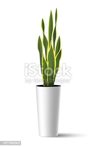 Vector illustration of house plant Sansevieria trifasciata (mother-in-law's tongue) in high pot