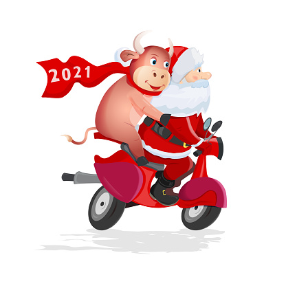 Santa Claus and funny bull rides a red scooter