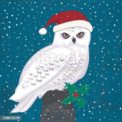 istock Santa Claus Snowy Owl 1286732781