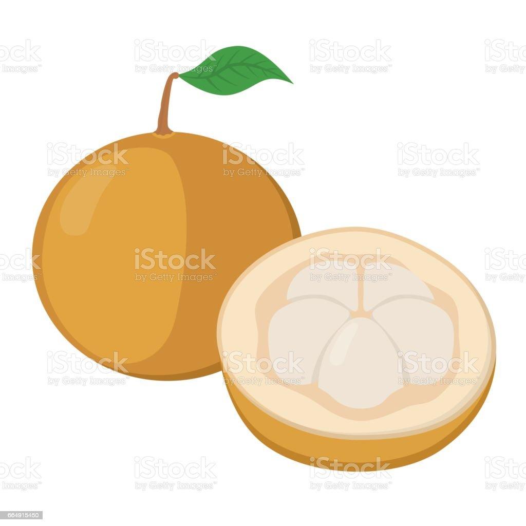 Santol, krathon tropical fruit in cartoon flat style. Exotic tropical nutrition. santol krathon tropical fruit in cartoon flat style exotic tropical nutrition - immagini vettoriali stock e altre immagini di asia royalty-free