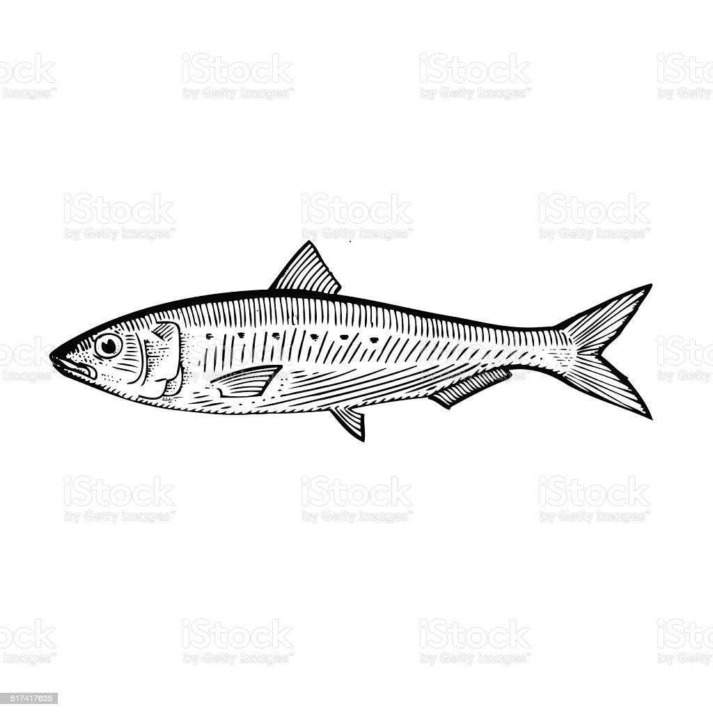 royalty free sardine clip art  vector images king mackerel clipart king mackerel clipart