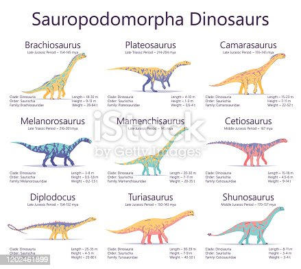 Sauropodomorpha dinosaurs. Colorful vector illustration of dinosaurs isolated on white background. Set of ancient creatures with information of size, weigh, classification and period of living