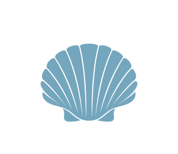 scallop logo.  isolated scallop on white background - scallop stock illustrations, clip art, cartoons, & icons