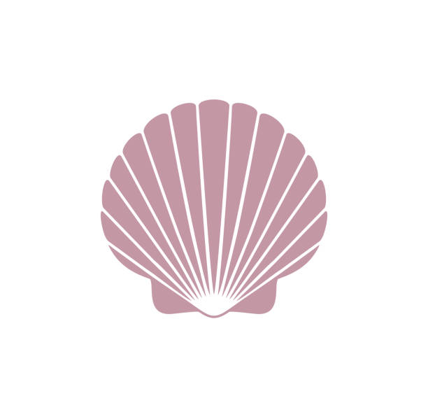 Scallop logo. Isolated scallop  on white background EPS 10. Vector illustration animal shell stock illustrations