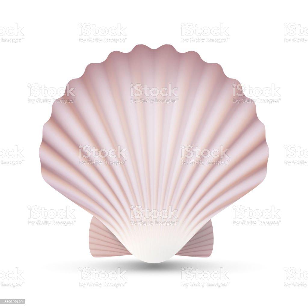 Scallop Seashell Vector. Ocean Mollusk Sea Shell Close Up. Isolated. Illustration vector art illustration