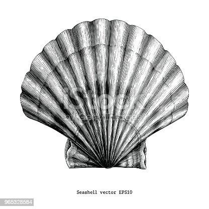 istock Scallops Seashell vintage clip art 965328584