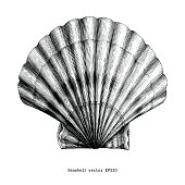 Scallops Seashell vintage clip art