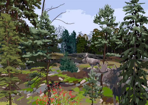 bildbanksillustrationer, clip art samt tecknat material och ikoner med skandinaviskt landskap med barrskog i klippiga fält. - älg sverige