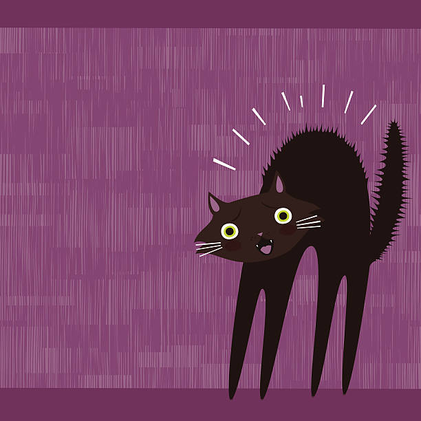Scared black cat vector art illustration