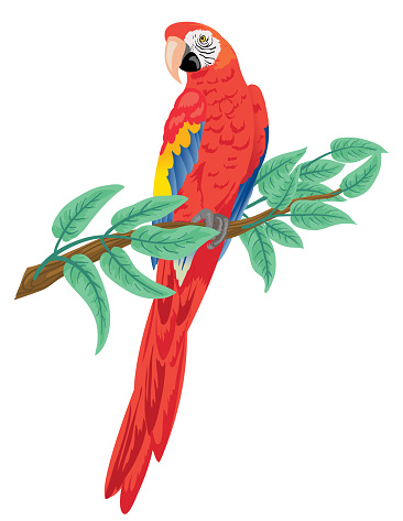 Scarlet Macaw Parrot Perched On A Branch