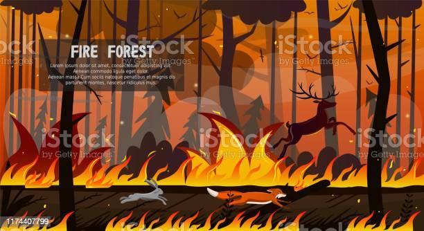 Scary animals fox hare deer run in forest fire vector id1174407799?b=1&k=6&m=1174407799&s=612x612&h=esnsbospvzkqth5 zskwmjdepirvefknv6we2x6eroy=