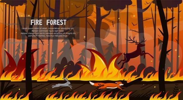 bildbanksillustrationer, clip art samt tecknat material och ikoner med skrämmande djur räv hare hjort kör i skogsbrand - skog brand