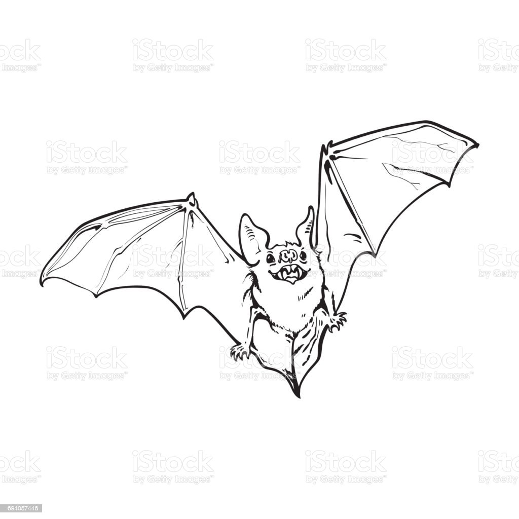 Scary Flying Halloween Vampire Bat Isolated Sketch Style Vector