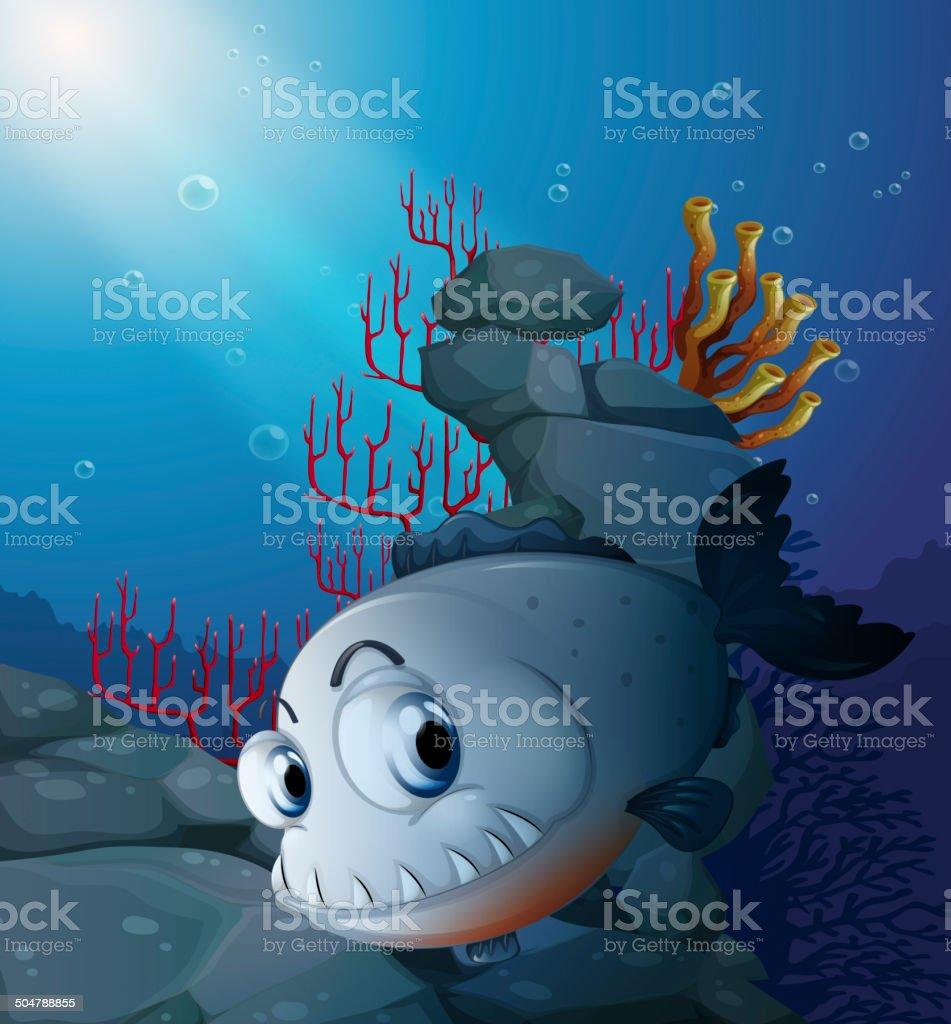 Scary piranha near the rocks vector art illustration