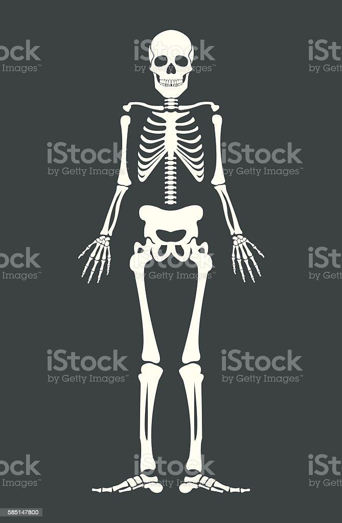 Scary skeleton. Vector flat cartoon illustration vector art illustration