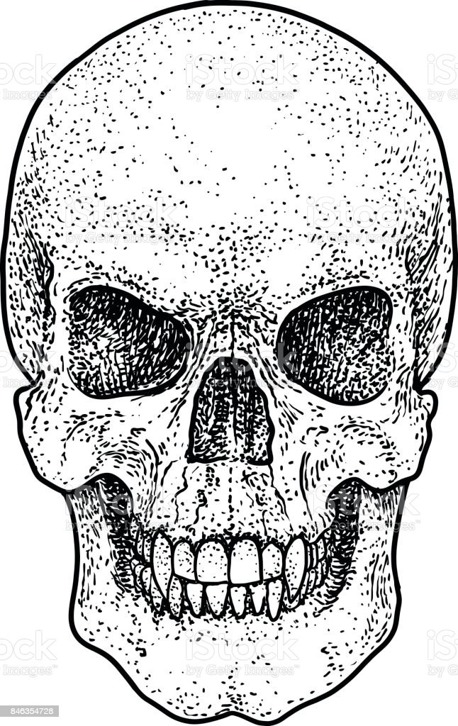 c3e3cddc26d8f Scary skull illustration, drawing, engraving, ink, line art, vector -  Illustration .