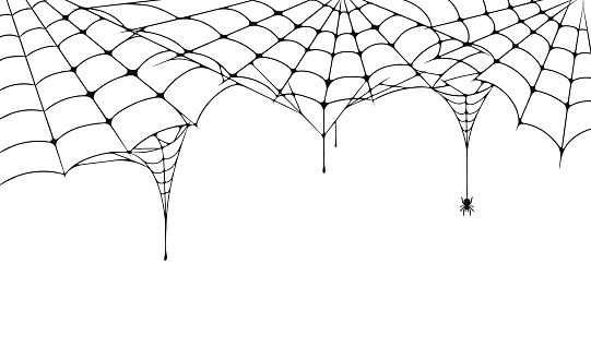 Scary spider web, Halloween festive background. Cobweb on white background with spider. Spooky spider web for Halloween poster, greeting card, party invitation etc