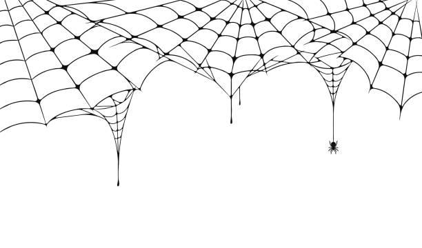 illustrazioni stock, clip art, cartoni animati e icone di tendenza di scary ragnatela, sfondo festivo di halloween. ragnatela su sfondo bianco con ragno. spettrale ragnatela per poster di halloween, biglietto di auguri, invito festa ecc - halloween