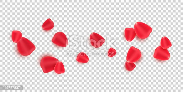 Scattered red rose petals isolated on transparent background. Valentine's Day. Romantic flowers for Valentine's Day or wedding. Vector illustration