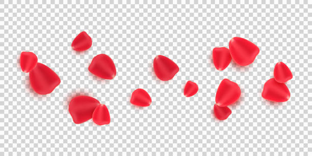 투명한 배경에 고립 된 흩어진 빨간 장미 꽃잎. 발렌타인 데이. 발렌타인 데이 또는 결혼식을위한 낭만적 인 꽃. 벡터 그림입니다. esp 10 - 꽃잎 stock illustrations