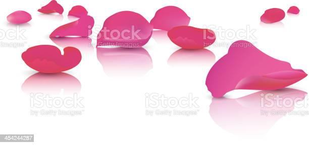 Scattered rose petals vector id454244287?b=1&k=6&m=454244287&s=612x612&h=efxesm eh jvwzigw1nzznz00gaf5pi1lxb7aoyk8cm=
