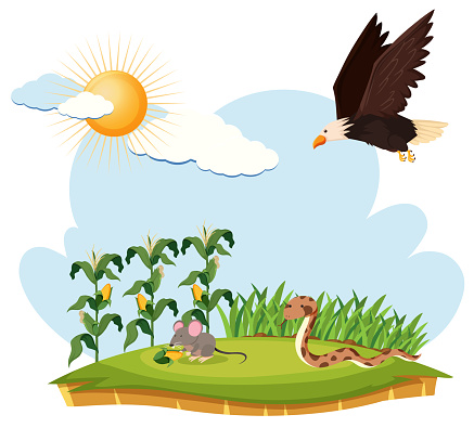 Scene with eagle, mouse and snake on a farm