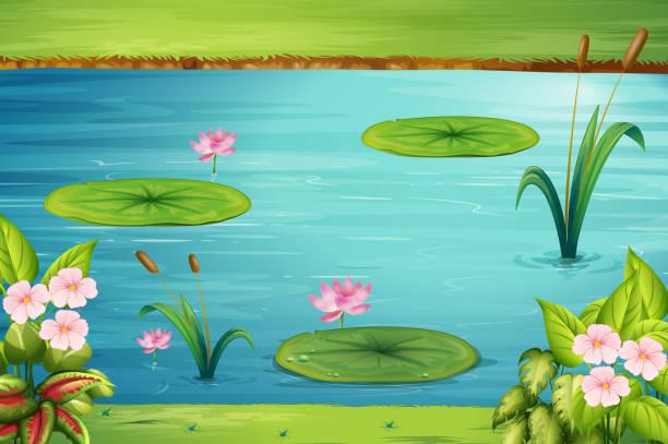 szene mit lotus in den teich - seerosenteich stock-grafiken, -clipart, -cartoons und -symbole