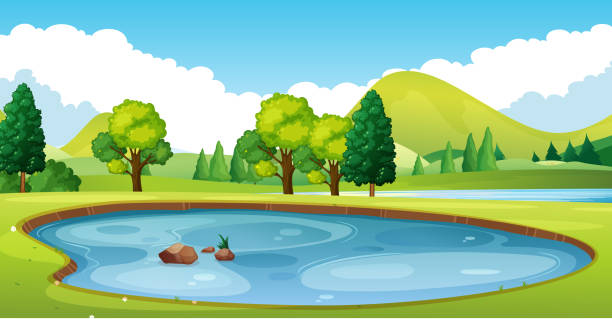 Scene with pond in the field Scene with pond in the field illustration backgrounds clipart stock illustrations