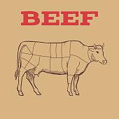 Scheme of Beef cuts. Vector