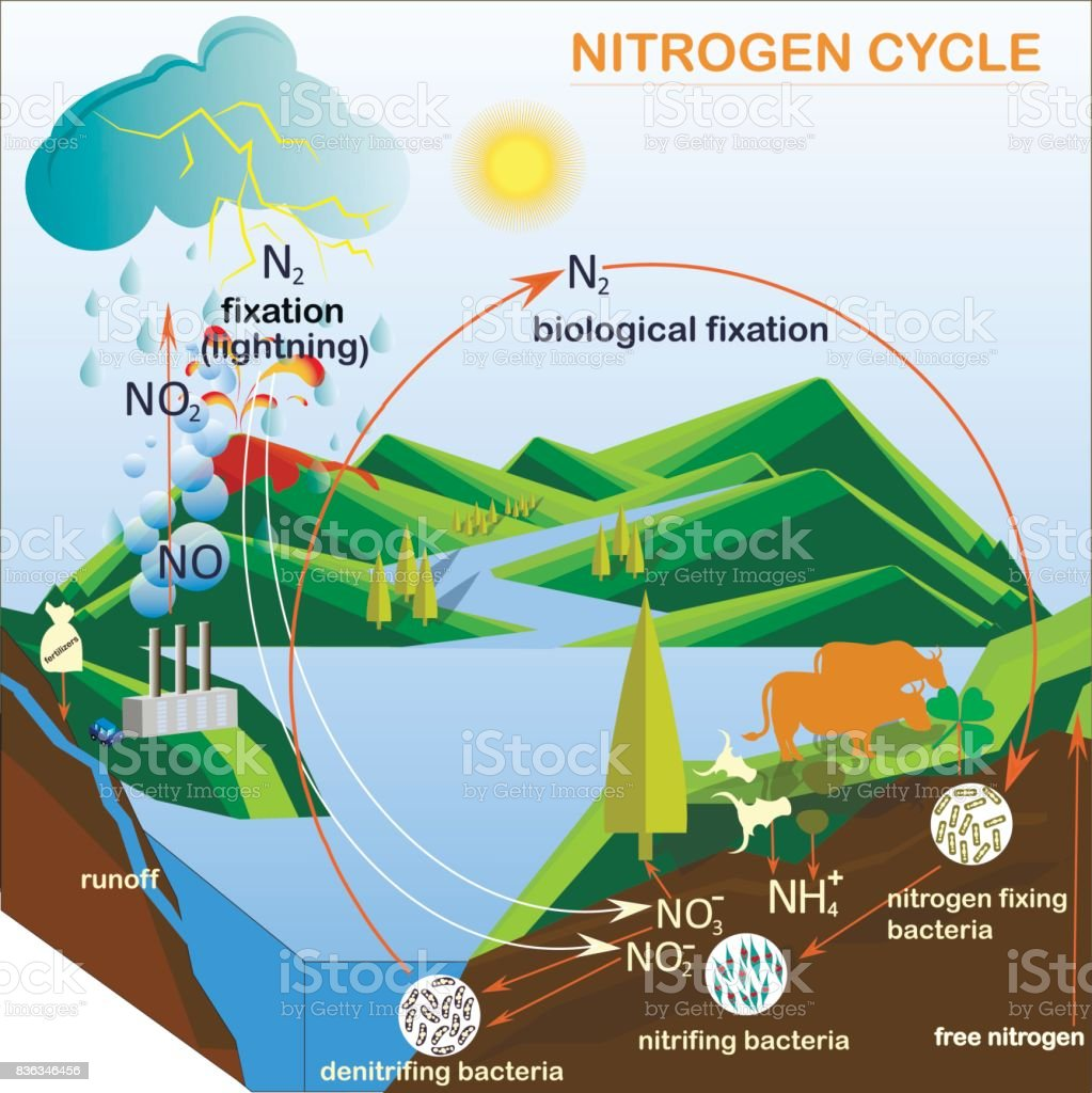 Scheme of the nitrogen cycle stock vector art more images of scheme of the nitrogen cycle royalty free scheme of the nitrogen cycle stock vector art ccuart Gallery
