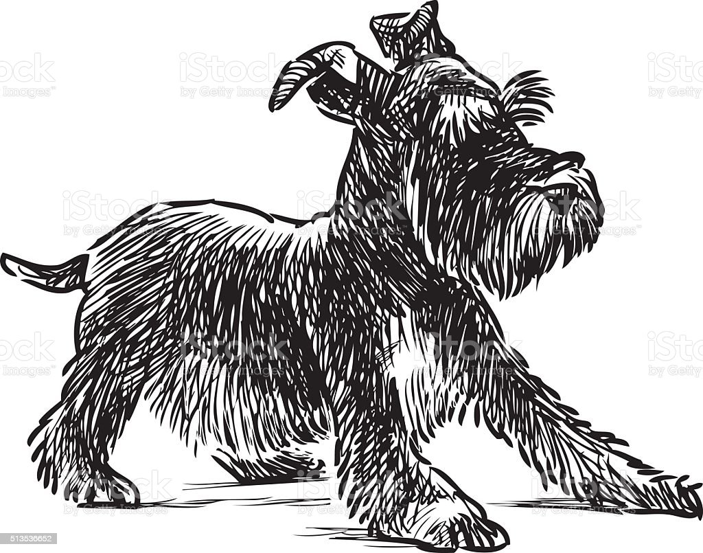 schnauzer puppy vector art illustration