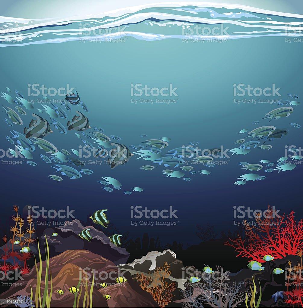 Banc de poissons et corail - Illustration vectorielle