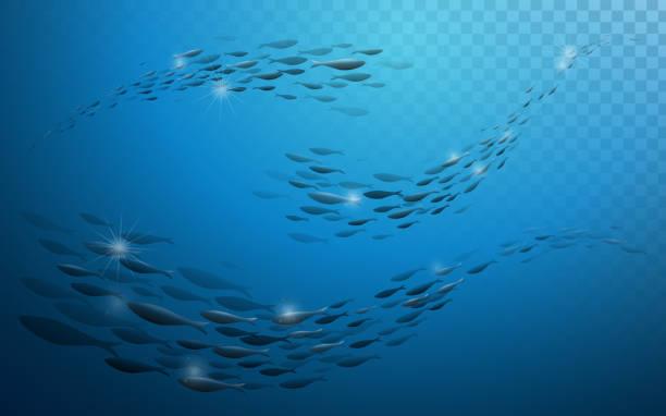 Banc de poissons  - Illustration vectorielle