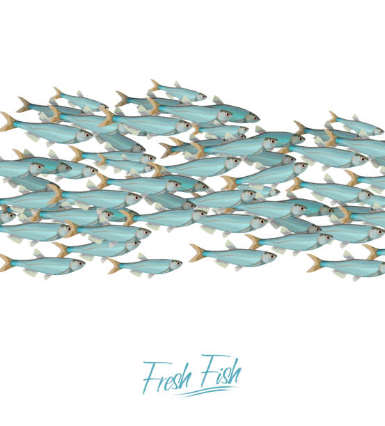 School of fish vector illustration for header, web, print, card and invitation. Plenty of herring or cod moving in the sea. vector art illustration