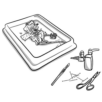 Science Lab Dissection Rat